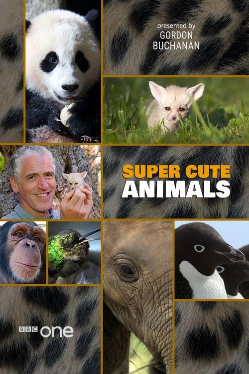 Super Cute Animals - Movie Poster