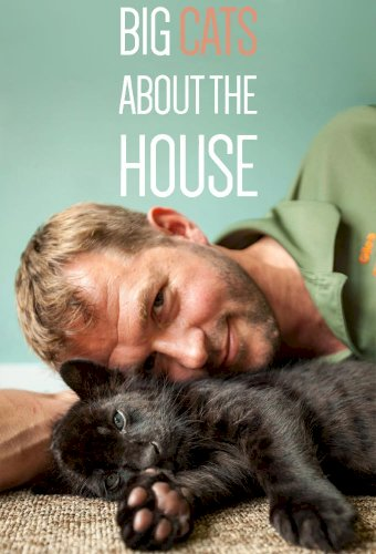 Big Cats About The House