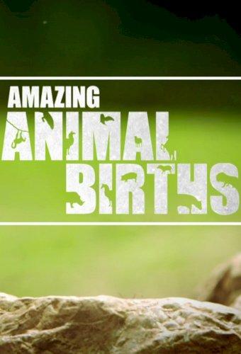 Amazing Animal Births
